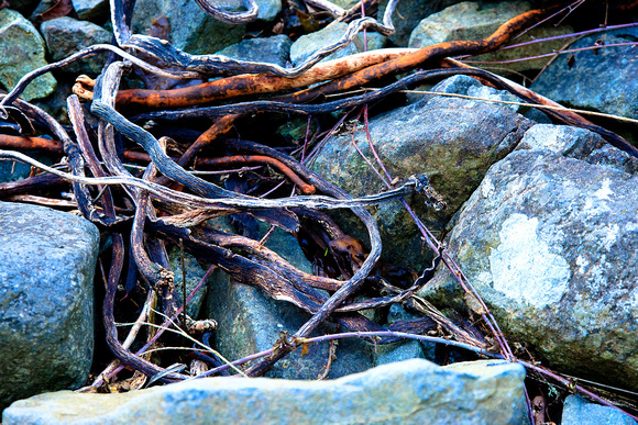 Dessicated Kelp